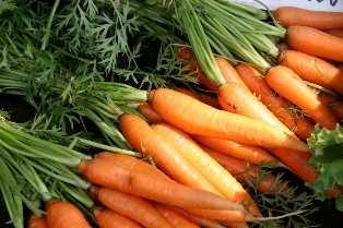 Waldorf School - Carrots