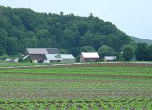 Farm and Lettuce