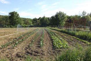 Organically Grown Vegetables